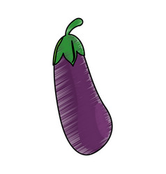 Drawing eggplant food nutrition vector
