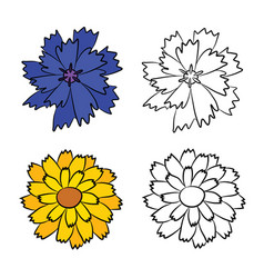 Drawing of cornflower and calendula vector