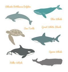 Great white shark sea turtle atlantic bottlenose vector