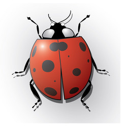 ladybug isolated on white realistic vector image