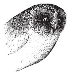 Owl beak vintage vector