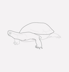 turtle icon line element of vector image