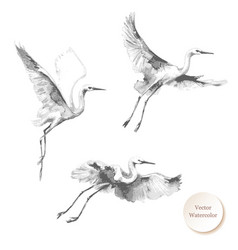 White flying storks watercolor sketch vector