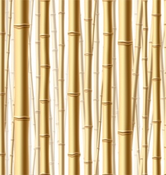 bamboo forest background vector image