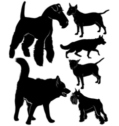 dog collection vector image