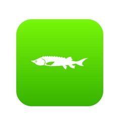 Fresh sturgeon fish icon digital green vector