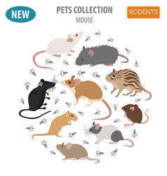 mice breeds icon set flat style isolated on white vector image vector image