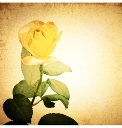 Yellow Rose vector image vector image