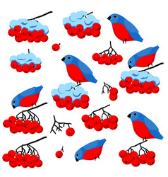 bullfinches bunch of rowan and snow vector image