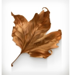 Dry maple leaf vector image