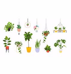 Set macrame hangers for plants growing in pots vector