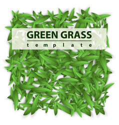 square template grass green leaf vector image