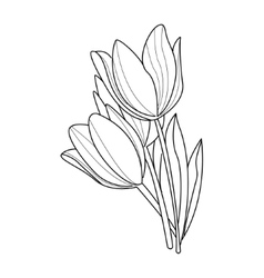 Tulip flowers sketch vector