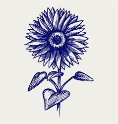 Beautiful sunflower vector image vector image