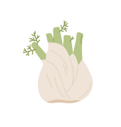 bulb-like fennel root with leaves icon green vector image