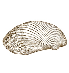 Engraving clam shell vector