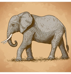 Engraving elephant retro vector