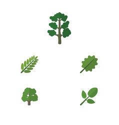 Flat icon nature set of forest alder leaves and vector