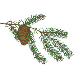 green fir branch with pine cone vector image