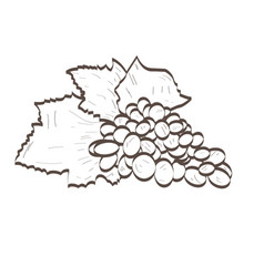 Isolated blueberries outline vector