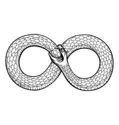 Snake curled in infinity ring Ouroboros devouring vector