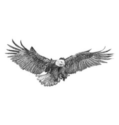 Bald eagle swoop hand draw doodle sketch vector
