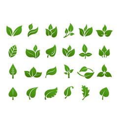 green leaves logo plant nature eco garden vector image