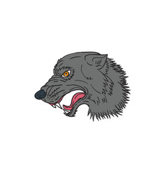 grey wolf head growling drawing vector image