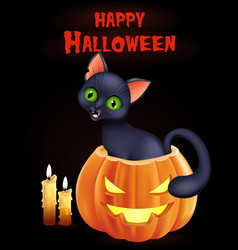 halloween background with cat sitting inside pumpk vector image