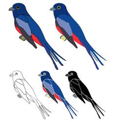 Surucua de barriga vermelha bird in profile view vector