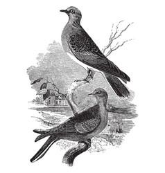 Turtle doves vintage vector