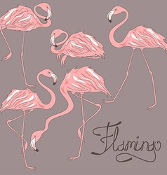Isolated flamingos in different positions vector image vector image