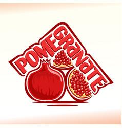 pomegranate still life vector image