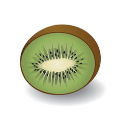a half kiwi fruit vector image