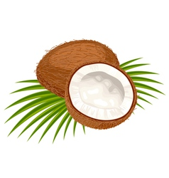 coconut leaves vector image vector image