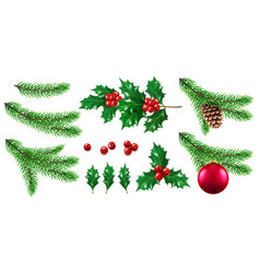 pine or fir tree branch with toy and holly berry vector image