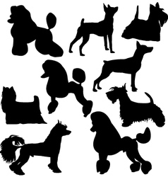 Set of sillhouttes of standing decorative dogs vector image