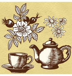 Chamomile tea and rosehip vector image vector image