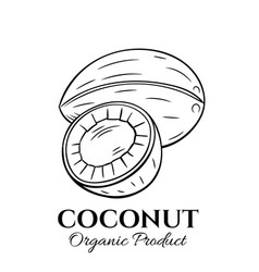 hand drawn coconut icon vector image