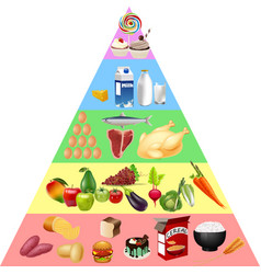 Food pyramid chart vector