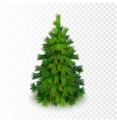 stock realistic christmas tree vector image