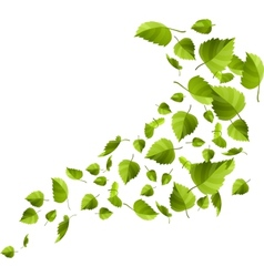Green leaves isolated on white vector image vector image
