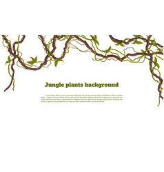 jungle plants background tropical frames vector image