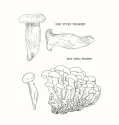 Sketch - mushrooms shimeji king vector