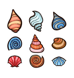 collection of various seashells isolated on white vector image vector image