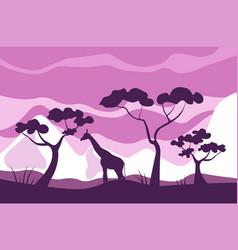 african savannah landscape giraffe eats leaves of vector image
