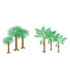 Isometric Palm Trees vector