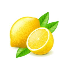 Lemon and slice isolated on white vector