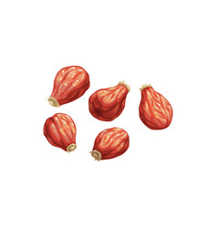 Rose hip dried fruits dry food snacks sweets vector