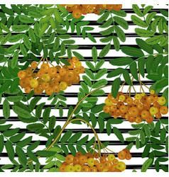 seamless pattern with rowanberry on strips summer vector image